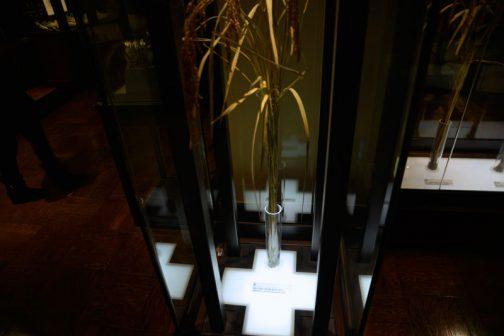 様々なイネの品種が展示されています。 旭 明治・大正期の代表的な品種 南日本に普及した。