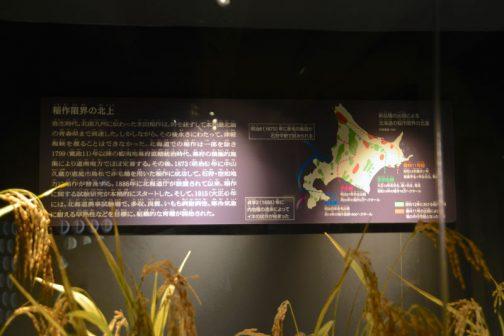 稲作限界の北上 弥生時代、北部九州に伝わった水田稲作は、時を経ずして本州最北端の青森県まで到達した。しかしながら、その後永きにわたって、津軽海峡を渡ることはできなかった。北海道での稲作は一部を除き1799(寛政11)年以降の蝦夷地幕府直轄統治時代、幕府の積極的施策により道南地方でほぼ定着する。その後、1873(明治6)年に中山久蔵が恵庭市島松で赤毛種を用いた稲作に成功して、石狩・空知地方に稲作が普及する。1886年に北海道庁が設置されて以来、稲作に関する試験研究が本格的にスタートした。そして、1915(大正4)年には、北海道農事試験場で、多収、良質、いもち病耐病性、寒冷気象に耐える早熟性などを目標に、組織的な育種が開始された。 とあります。
