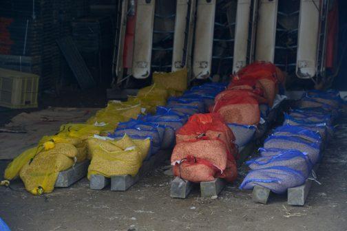 おっと・・・脱線してしまいました。倉庫には芽出しの済んだ2000箱分の種籾が並んでいます。