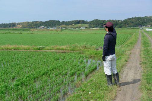 農地の点検。