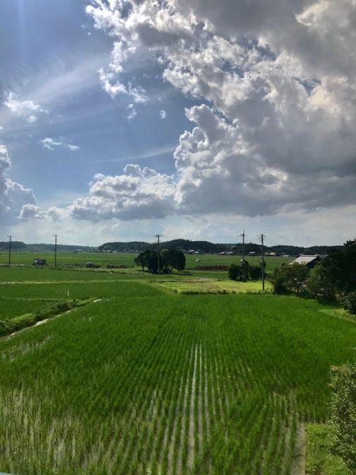 田鏡はすっかり小さくなってしまい、稲と稲の隙間にわずかにあって、ほんのちょっと空を映しているだけです。雨模様の日が多いけど、たまに松の空が顔を出します。