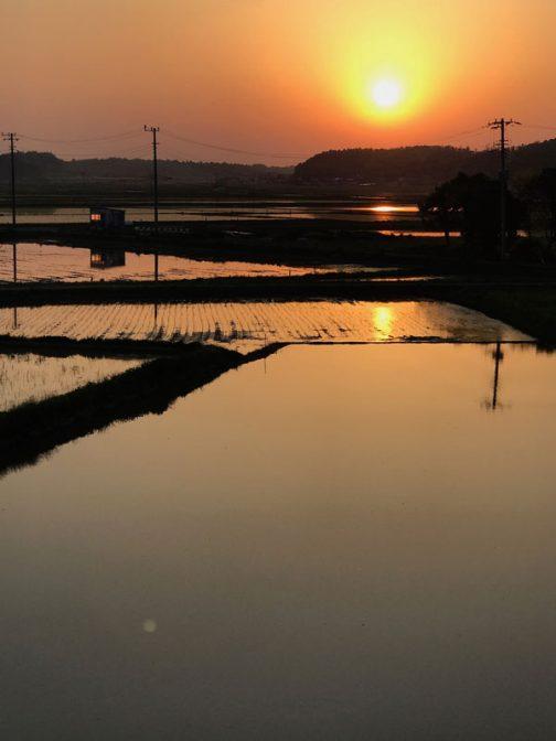 4月下旬から5月上旬にかけて水が湛えられていつの間にか周りは湖に・・・