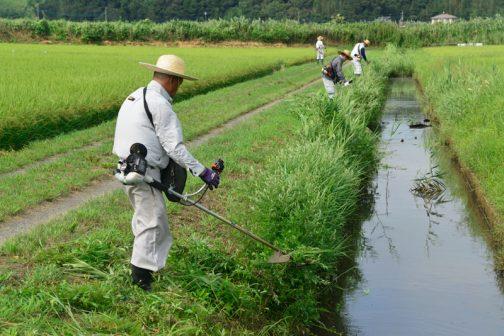 同じく農道脇、水路の法面、スライドモアの届かなかった部分をを刈ります。