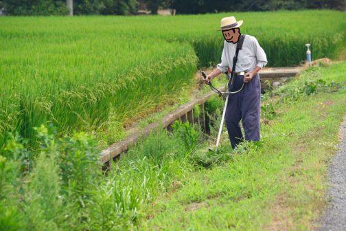 稲もだいぶ実ってきました。農道の法面を刈ります。
