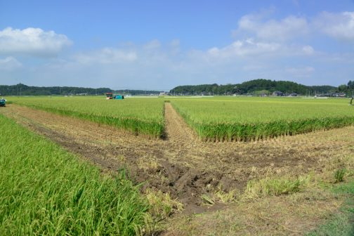 遠くに島地区の人たちを視認。現場に到着して見ると田んぼが斜めに割れていました。