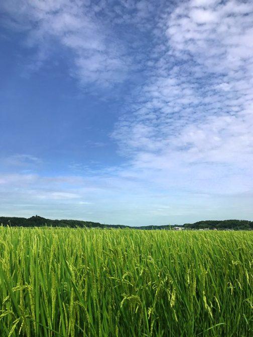 連日の暑さは夏そのものですが、空はもう秋です。