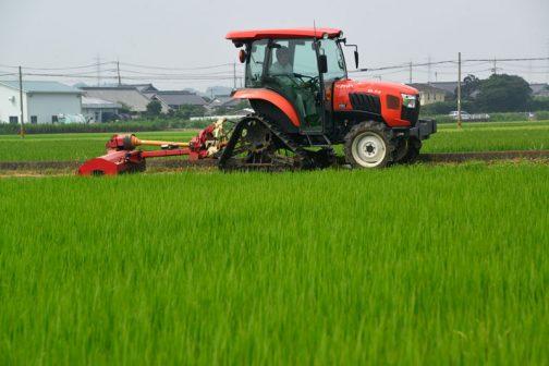 農家の「草刈りセンサー」は本当にシャープ。この町内の草刈りより先に僕が草刈りをすることはほとんどないです。(たまに周回遅れで僕が先になることがありますが)