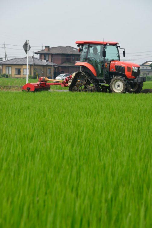 というわけで、次の活動日に向けスライドモアの草刈りが始まりました。