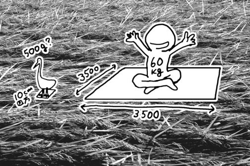 仮にチュウサギが500g、そんなことはないと思いますが、足の裏が10センチ四方だとします。それで稲の上に乗っていられるのだから、60キロの人間が稲の上に乗るためには3.5m四方の板の上なら乗っかれるということになります。