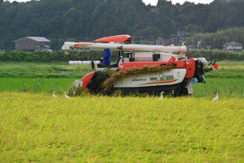 まず田んぼの外周、2廻りか3廻りを普通に刈ります。刈り残った稲はきれいな四角になりました。