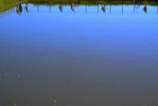 空を写す水面も青いです。