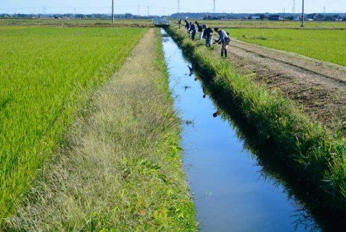 水路の草刈り。スライドモアが通ったあとなのがわかるでしょうか?