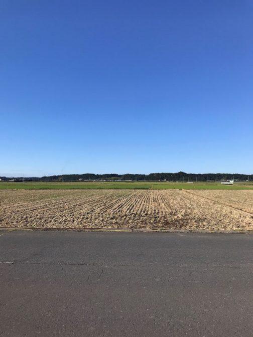毎年毎年変わらぬように見える稲刈り後の風景。足元ではちょっとずつ変化が起きているのでした。