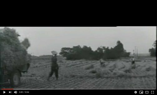 冒頭に農作業の風景がでてくるのですが、これ、島地区じゃないのですかねぇ・・・地面に並べた稲(だと思うのですが、映像が不鮮明なためによくわかりません)を運ぼうとしているところです。