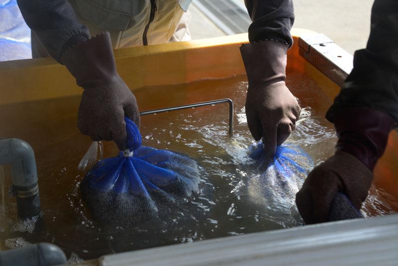 温湯消毒自体は60どのお湯に種籾を7分間浸すという作業です。