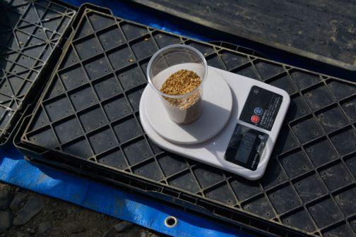 コシヒカリ、決定したいい感じのまき量は168グラム。種が小さい分、飼料稲に比べて数も重さも多くなっています。