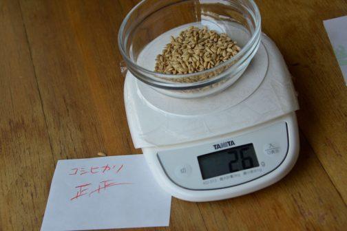 乾いたコシヒカリの種籾1000粒は26グラム!