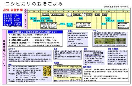 茨城県農業総合センター作成の「コシヒカリの栽培ごよみ」という、ちょうど良い資料を見つけました。