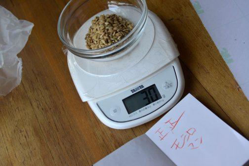 モミロマンの乾籾1000粒をまず数えてみました。モミロマンの乾籾1000粒の重さは30グラム。