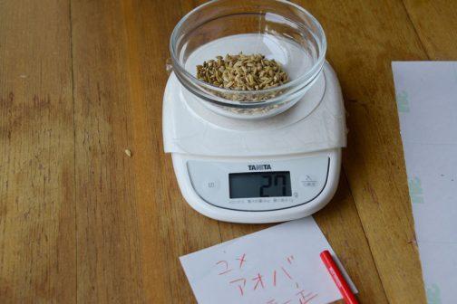 以前もらっておいたユメアオバの乾籾1000粒をまず数えてみました。ユメアオバ乾籾1000粒の重さは27グラム。図体が大きい割には中身が詰まっていないんですね・・・コシヒカリとほとんど重さが変わりません。逆にコシヒカリの粒の小さい割に中身が詰まっていることが際立ちます。飼料稲と言っても、実の部分を食べるわけではないので問題は全く無いわけですけど・・・