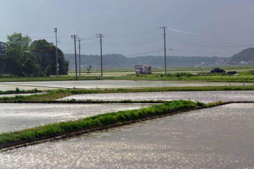 その翌日、雨が降ったり止んだりの不安定な天気。一瞬の晴れ間に水面がキラキラします。赤ちゃんの産毛を透かすように遠くはうっすらと稚苗の緑。