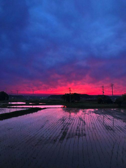 一週間前。朝からの様々さ作業で激しい動きがあった近所の田んぼ。田植えはなんとか終わったようで静かに空を映していました。