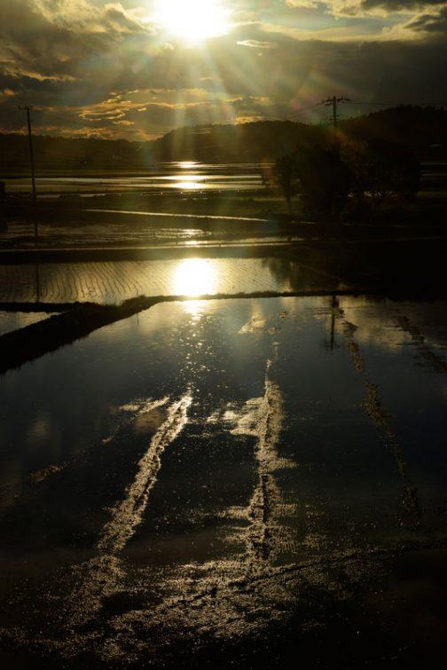 雷とともに雹交じりのすごい雨が降ったと思ったら、今度は晴れて太陽が顔を出しました。賑やかなことです。田鏡もすごく派手!遙向こうから手前まで全部の田んぼに太陽が映って繋がっています。