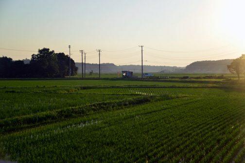 田んぼはほとんど水面が見えなくなりました。