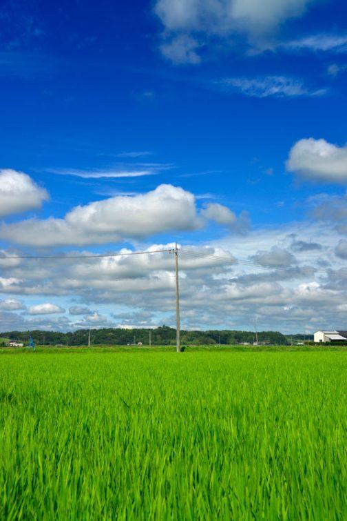 こちらも珍しい日中の写真。空気が澄んでいる時は見慣れた風景もいつもと違って見えます。