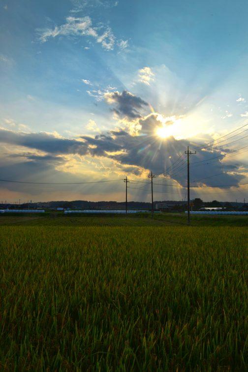 家のものに「外にすごく飼料稲のサイレージがたくさんが並んで壮観だよ!」と言うので見に行きました。あまりに並んでいるので写真のフレームに収まりません。