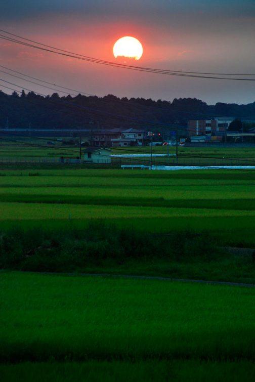 8/29日。ずいぶん左にやって来ました。この日はなぜか夕日が大きかったです。まだ田んぼも青々としていますね!