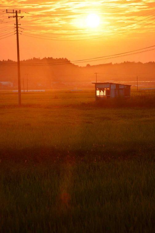 久々に晴れた昨日。(今朝はまたぐずついたお天気に逆戻りですが)早朝朝靄に包まれた同じ場所が夕方は綺麗なオレンジでした。